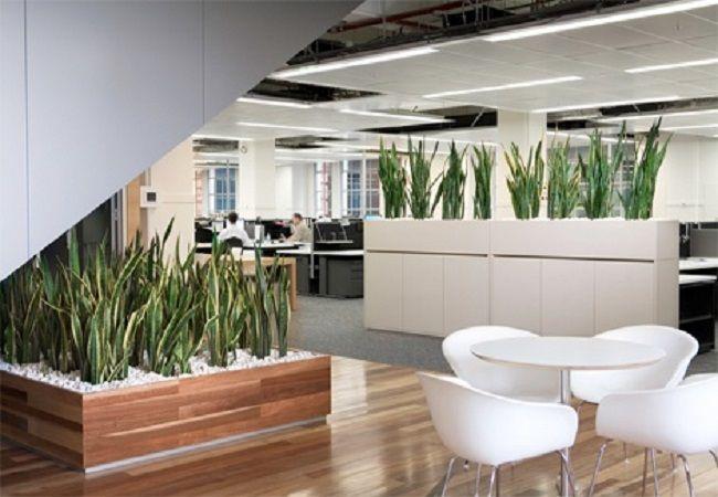 diseñar una oficina con plantas
