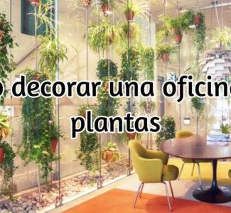 Decoración de oficinas con plantas